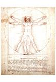 Leonardo Da Vinci DaVinci Study of Man Art Print POSTER Poster