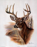 Ruane Manning (Fall Splendor Deer) Art Poster Print Prints