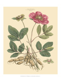 Blushing Pink Florals I Posters por  John Miller (Johann Sebastien Mueller)