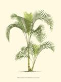 Palme an der Küste IV Kunst