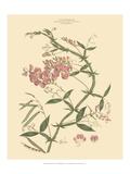 Blushing Pink Florals VI Plakater av  John Miller (Johann Sebastien Mueller)