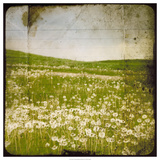 Field I Poster by Ingrid Blixt