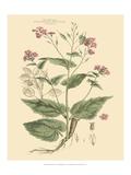 Blushing Pink Florals VII Posters av  John Miller (Johann Sebastien Mueller)