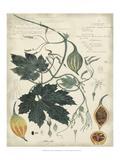 Botanical I Premium Giclee Print by A. Descubes