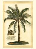 British Colonial Palm III Kunstdrucke