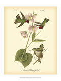 Anna Hummingbird Pôsters por John James Audubon