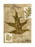 Leaf Collage II Premium Giclee Print by Kate Archie