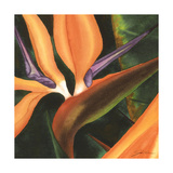 Bird of Paradise Tile IV Print by Jason Higby