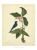 Catesby Bird & Botanical IV Pôsters por Mark Catesby