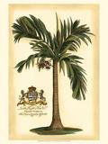 British Colonial Palm I Kunstdrucke
