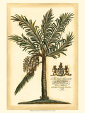 British Colonial Palm II Affiche