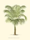 Coastal Palm III Plakater