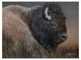 American Icon- Bison Poster af Kevin Daniel