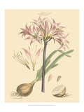 Blushing Pink Florals II Plakater av  John Miller (Johann Sebastien Mueller)