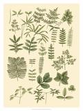 Abundant Foliage II Poster av  John Miller (Johann Sebastien Mueller)