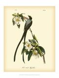 Fork-Tailed Flycatcher Plakater af John James Audubon