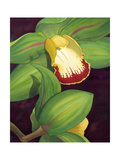 Lime Orchid II Poster by Jason Higby