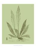 Fresh Ferns I Prints by Samuel Curtis