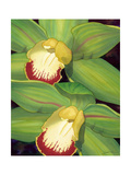 Lime Orchid I Prints by Jason Higby