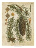 Vintage Conifers I Posters