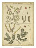 Diderot Antique Ferns II Kunstdrucke von Daniel Diderot