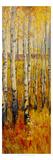 Vivid Birch Forest II Art by Tim O'toole