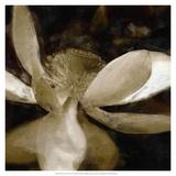Bronze Lily VI Prints by Noah Bay