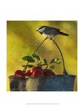 Apples and Chickadee Poster von Chris Vest