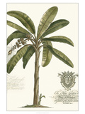 Non-embellished Palm Fresco I Posters por  Vision Studio