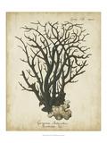 Esper Antique Coral I Posters by Johann Esper