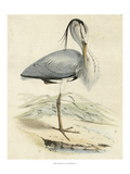 Antique Heron IV Posters