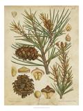 Vintage Conifers II Poster