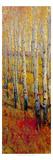 Vivid Birch Forest I Kunstdrucke von Tim O'toole