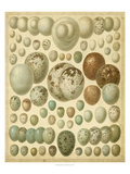 Vintage Bird Eggs I Poster