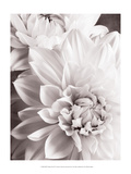 Black and White Dahlias II Poster af Christine Zalewski