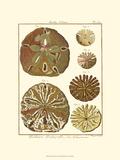 Sand Dollars III Giclée-Premiumdruck von  Diderot