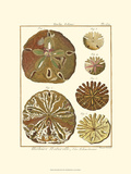 Sand Dollars III Lámina giclée prémium por  Diderot