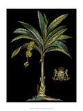 Palm & Crest on Black I Kunstdruck