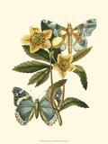 Butterfly Oasis III Plakater
