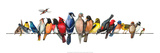 Large Bird Menagerie Posters af Wendy Russell