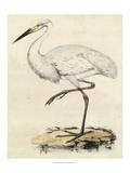 Antique Heron III Posters