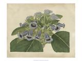 Tropical Beauty IV Giclée-Premiumdruck von Sydenham Teast Edwards