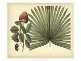 Antique Brazilian Palm Posters van Sir Hans Sloane