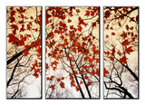 Ramas desnudas y hojas rojas de arce junto a la autopista Lámina por Gehman, Raymond