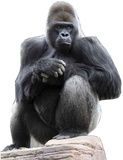 Gorilla Figura de cartón
