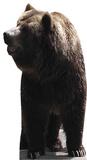 Bear Figura de cartón