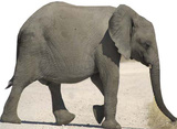 Babyelefant Pappfigurer