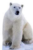 Polar Bear Pappfigurer
