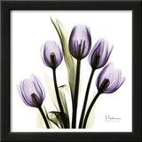 Tulip in Purple Poster por Albert Koetsier