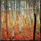 Bos met beukenbomen, ca.1903 Kunst op hout van Gustav Klimt